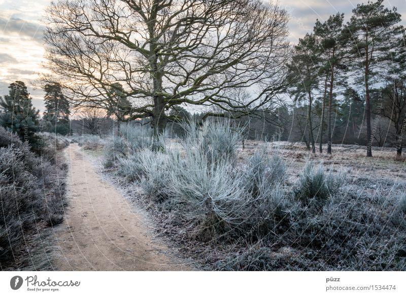 Wahner Heide Umwelt Natur Landschaft Pflanze Sonnenaufgang Sonnenuntergang Winter Wetter Eis Frost Baum Gras Sträucher Grünpflanze Wald gehen wandern blau braun