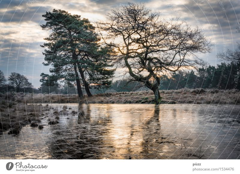 Morgenfrost Umwelt Natur Landschaft Pflanze Wasser Himmel Wolken Winter Baum Seeufer Teich dunkel kalt trist blau gelb grau Gefühle Stimmung träumen Traurigkeit