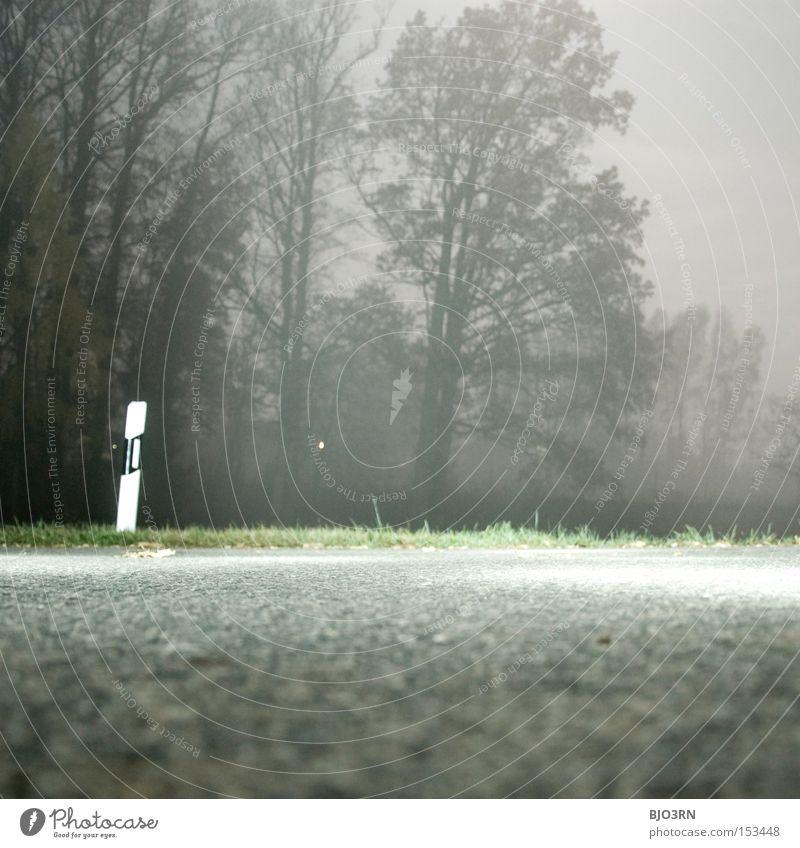 vorne Künstlich, hinten Natur Straße Wald Nebel Straßenrand gruselig künstlich Baum Asphalt Teer Leitpfosten Quadrat Langzeitbelichtung Außenaufnahme