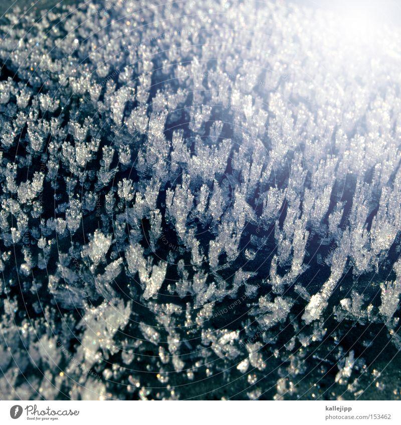 you are cold as ice Pflanze Winter kalt Schnee Eis Wachstum Frost Physik Jahreszeiten frieren Kristallstrukturen Kristalle Grad Celsius Januar Reifezeit