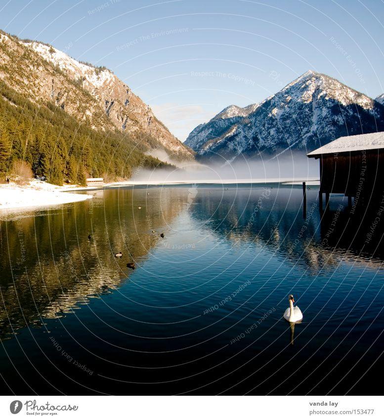 Heiterwanger See IV Himmel Natur Wasser Winter Landschaft kalt Schnee Berge u. Gebirge groß Frieden Spiegel Schwan Licht Bootshaus