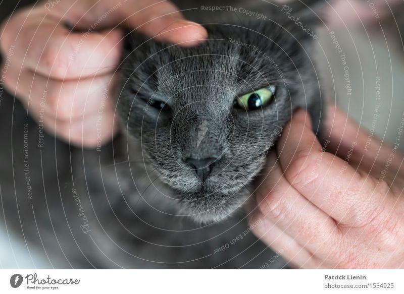 Katze Frau Natur schön Erholung Haus Tier Gesicht Erwachsene grau Freundschaft elegant stehen Energie einzigartig niedlich