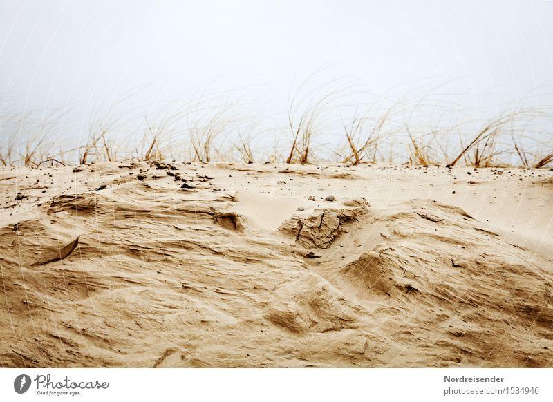 Küstenerosion Natur Landschaft Pflanze Urelemente Sand schlechtes Wetter Wind Sturm Regen Gras Nordsee Meer Wachstum maritim Wandel & Veränderung Dünengras