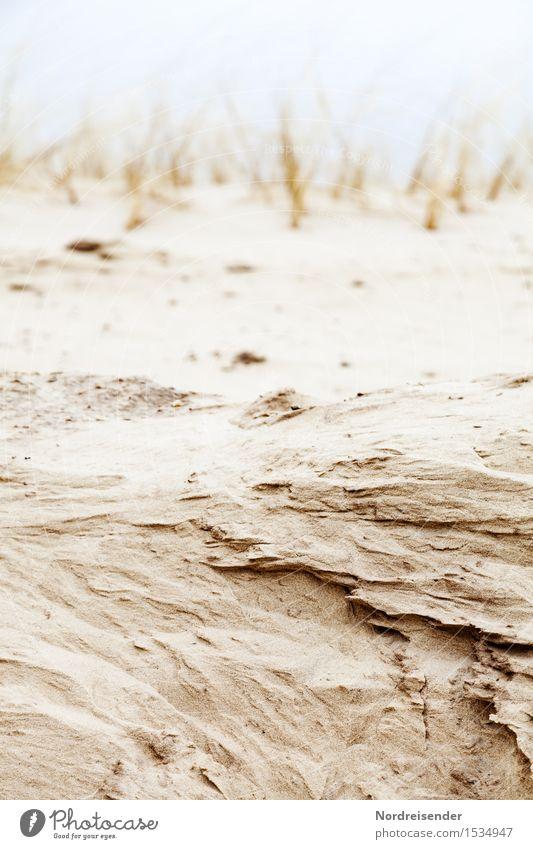 Landraub Natur Landschaft Pflanze Urelemente Sand Wind Gras Küste Nordsee Meer dehydrieren braun Wandel & Veränderung Düne Dünengras Erosion Küstenerosion