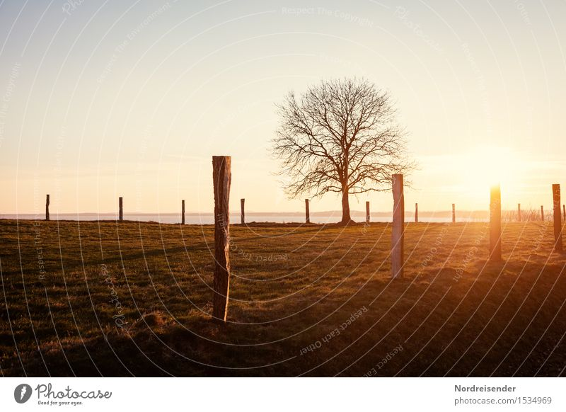 Ostsee im Januar harmonisch Sinnesorgane ruhig Meer Winterurlaub Natur Landschaft Himmel Wolkenloser Himmel Sonne Sonnenaufgang Sonnenuntergang Frühling Sommer