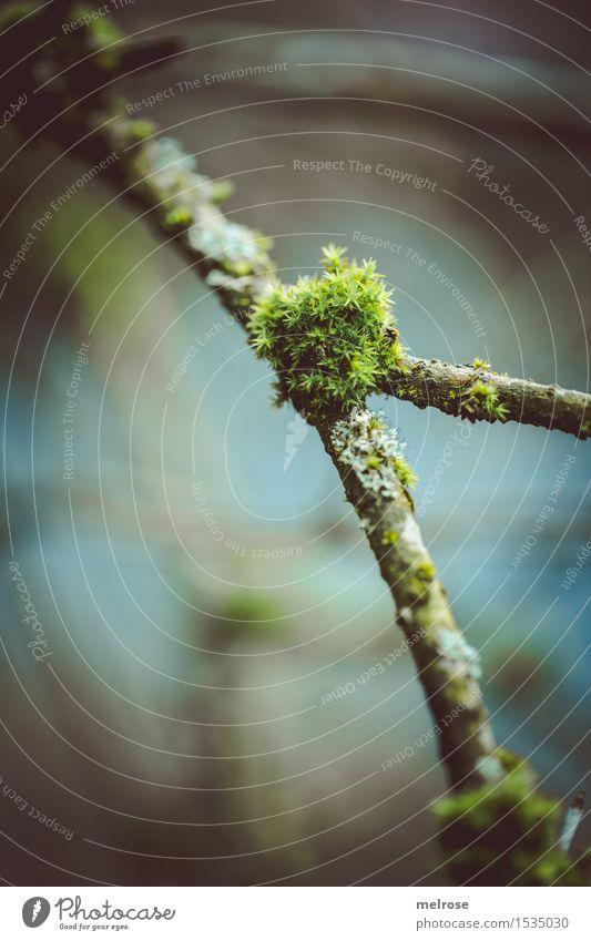 leicht verwachsen Umwelt Natur Frühling Schönes Wetter Pflanze Moos Wildpflanze Zweige u. Äste Lebewesen Wald Seeufer Moospflanze Astgabel Pflanzenteile Blühend