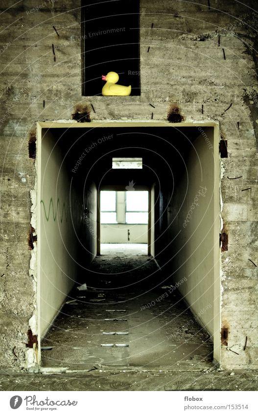 Steh-auf-Ente alt Einsamkeit gelb Wand Stein Vogel Beton Fassade Fabrik verfallen schäbig Flur Gang Badeente schädlich