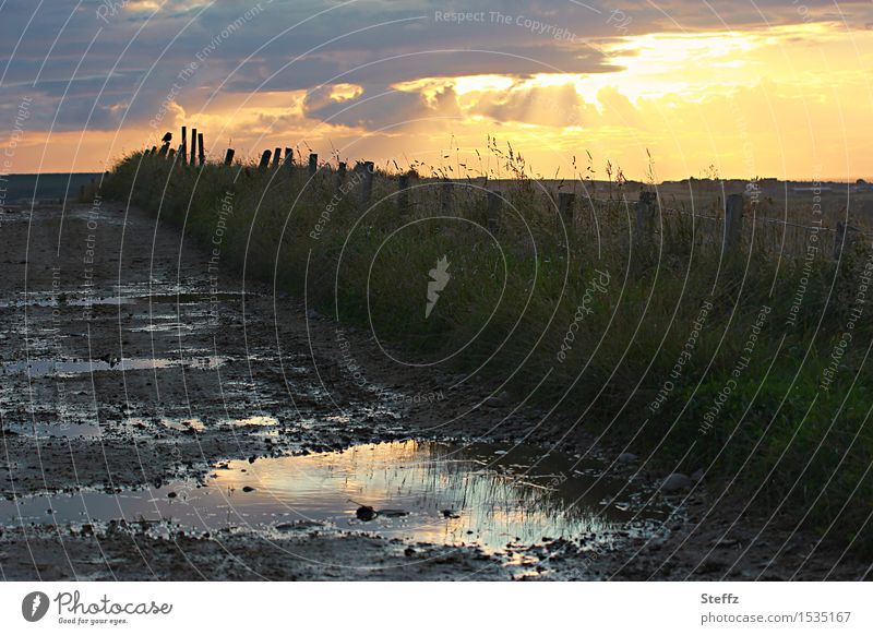 geh den Pfützenweg nicht allein Natur Wasser Landschaft Einsamkeit ruhig dunkel Wege & Pfade Gras Stimmung Regen wandern Romantik Fußweg geheimnisvoll Zaun