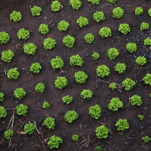 überwacht   Kleingartenordnung Ferne Umwelt Wege & Pfade natürlich Garten Lebensmittel Zeit Design Zufriedenheit Feld Wachstum Erde Ernährung Ordnung