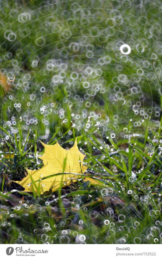 Laub grün Blatt Wiese Herbst Gras Wassertropfen Tau Lichtfleck Lichtkreis Spiegellinsenobjektiv (Effekt)