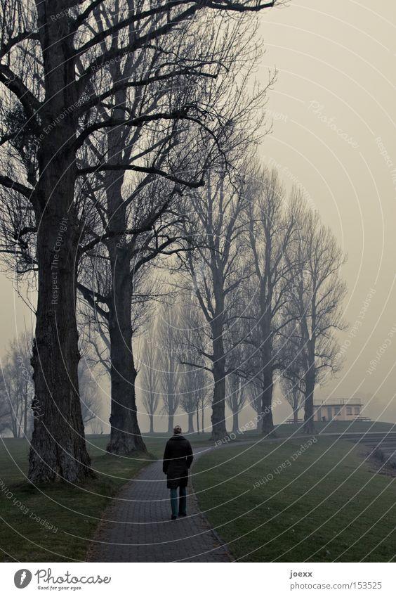 Nachdenken Frau Baum Winter ruhig Einsamkeit dunkel kalt Park Denken Nebel Spaziergang Ende Ziel trüb