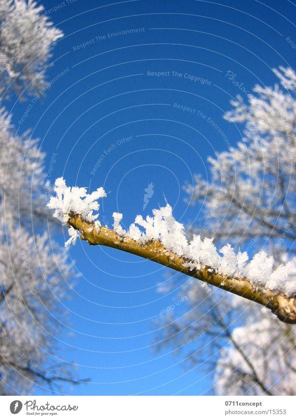 Eiskristalle 06 Ferien & Urlaub & Reisen blau Baum Winter kalt Graffiti Schnee Horizont leer gefährlich Spitze bedrohlich Stern (Symbol) Jahreszeiten gefroren