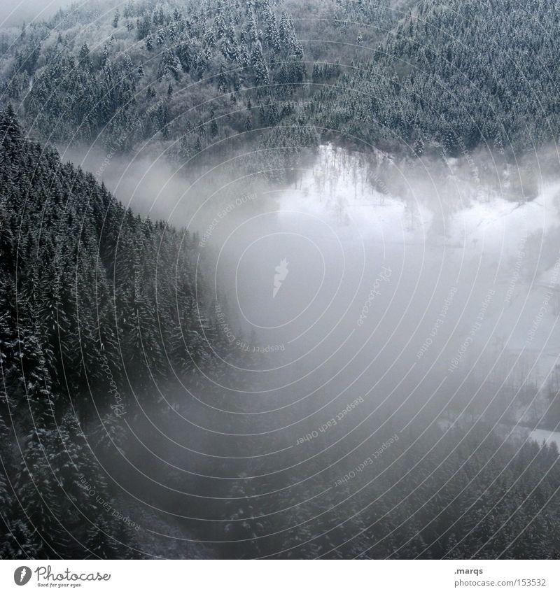 Nebel Farbfoto Gedeckte Farben Außenaufnahme Ferien & Urlaub & Reisen Tourismus Winter Schnee Berge u. Gebirge wandern Landschaft Eis Frost Wald Wachstum kalt
