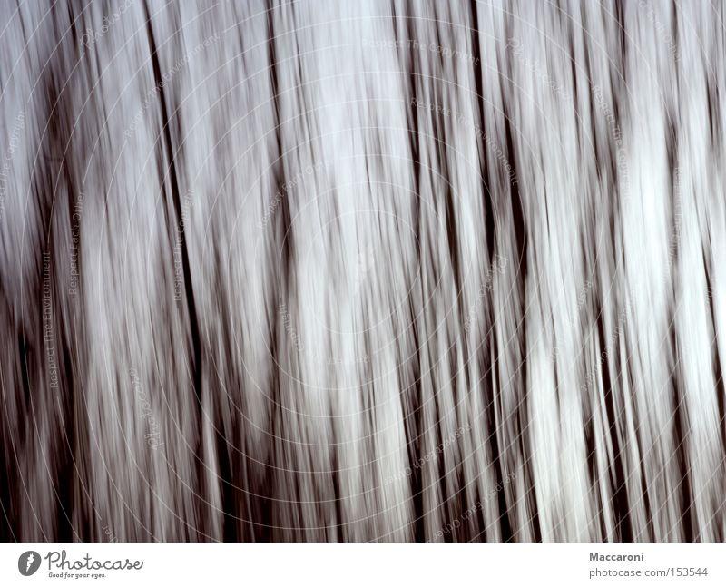 Pinselstriche weiß Farbe Pflanze Baum Winter schwarz Wald Umwelt Bewegung Stil Linie Kunst Geschwindigkeit Vergänglichkeit Abenteuer Gemälde