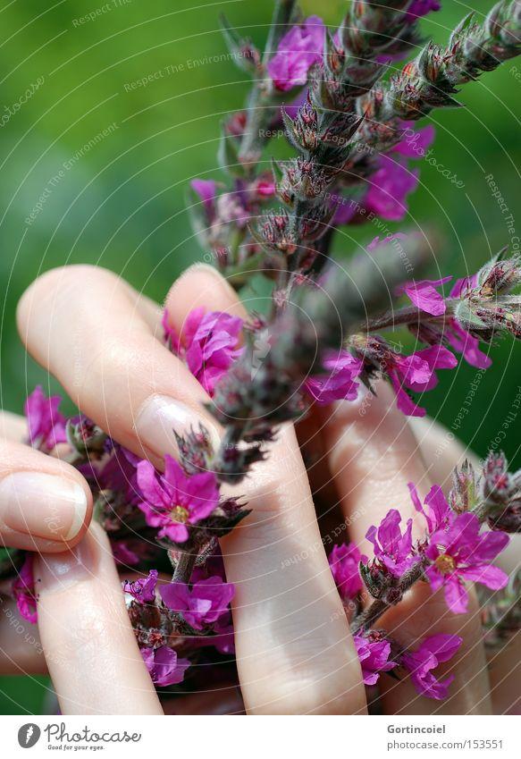 Erfüllend Frau Natur grün schön Pflanze Sommer Blume Erwachsene Umwelt Garten Blüte Frühling rosa elegant Haut Finger