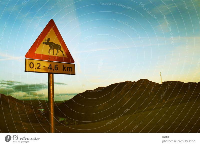 Vorsicht Elch! Himmel Natur Straße Berge u. Gebirge Landschaft Umwelt Schilder & Markierungen Sicherheit Hinweisschild Verkehrswege Skandinavien Warnhinweis Norwegen Hinweis Fahrbahn Verkehrsschild