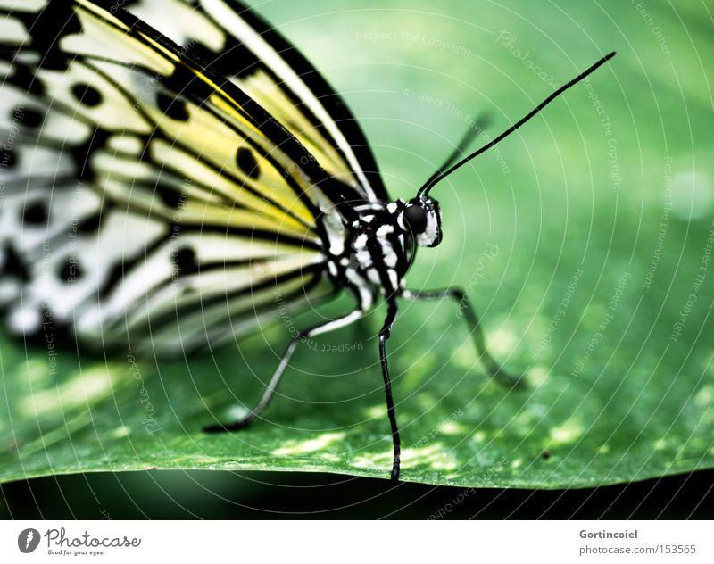 Schmetterviech VI Farbfoto mehrfarbig Nahaufnahme Makroaufnahme Muster Strukturen & Formen Licht Schatten Kontrast Schwache Tiefenschärfe Tierporträt elegant