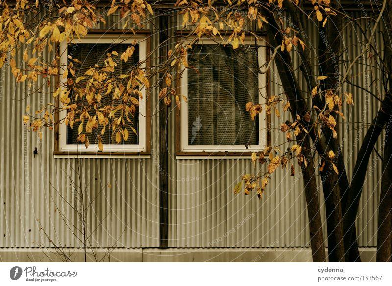 Herbst Natur Baum Haus Einsamkeit Fenster Zeit retro Vergänglichkeit verfallen Vergangenheit DDR Nostalgie altmodisch Leerstand unbenutzt