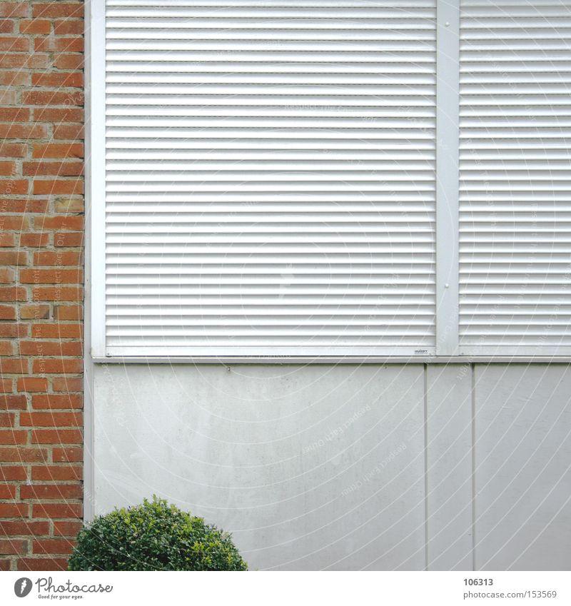 Fotonummer 107132 Baum Fenster Wand Industrie Sträucher Teile u. Stücke Backstein Grünpflanze Composing Rollladen Rollo Baumschössling