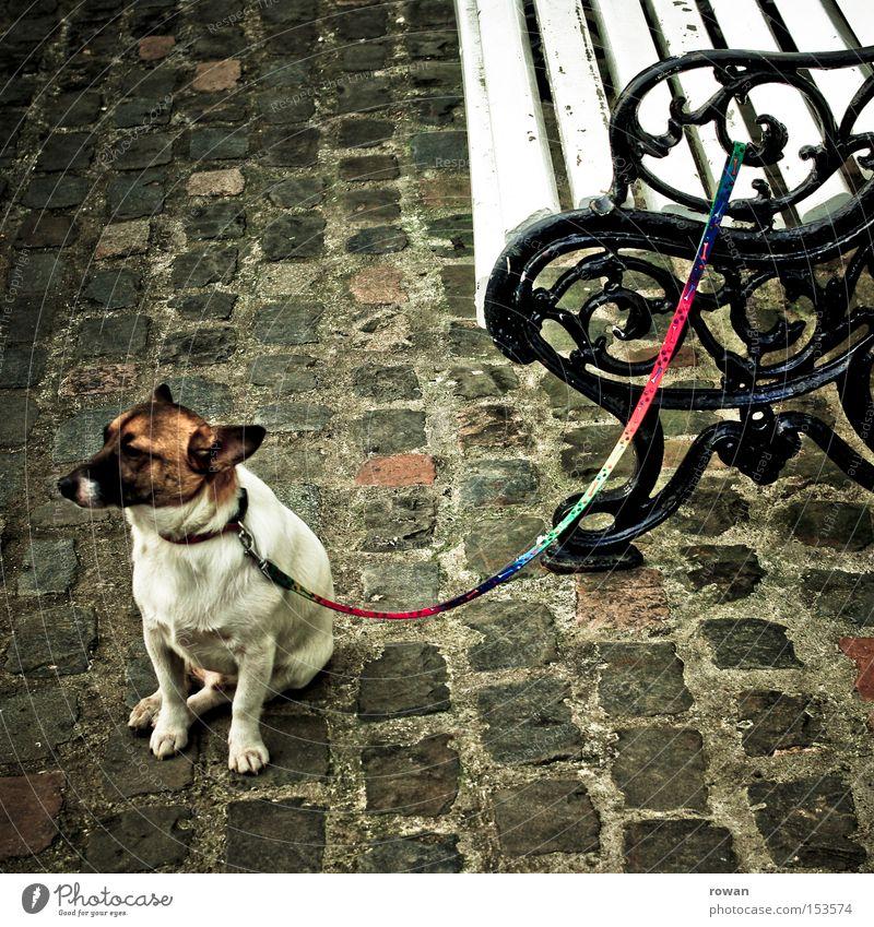 wo bleibt frauchen? Hund warten Ausdauer Treue Bank Park Erwartung Trauer Blick Langeweile Säugetier Seil geduldig Ungeduld Traurigkeit
