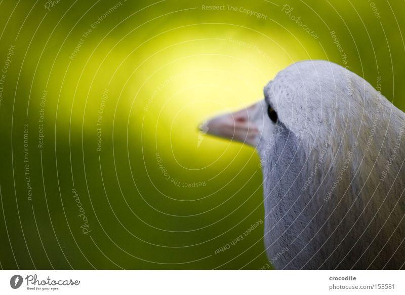 Hugo Vogel fliegen Freiheit grün Unschärfe Auge Schnabel Feder grau weiß unschuldig Blick Wegsehen Kopf hell Frieden Luftverkehr wegdrehen