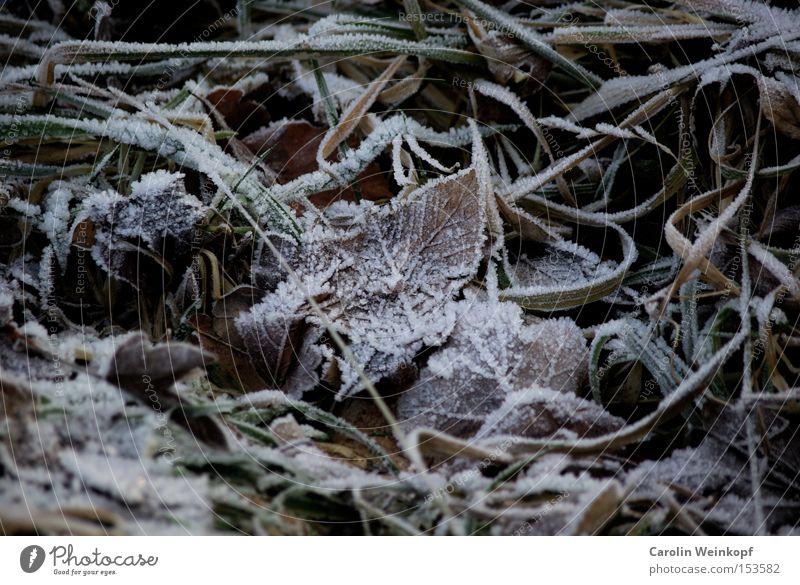 Frost. Winter Schnee Eis gefroren Blatt frieren kalt Klirren Gras Herbst Minusgrade Temperatur braun grün weiß Farbfoto Außenaufnahme Tag Menschenleer