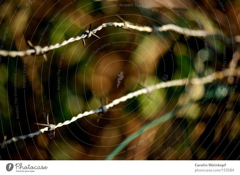 Stacheldraht. grün Blatt braun gefährlich Schutz verfallen Grenze Zaun Verbote Zutritt Stacheldrahtzaun