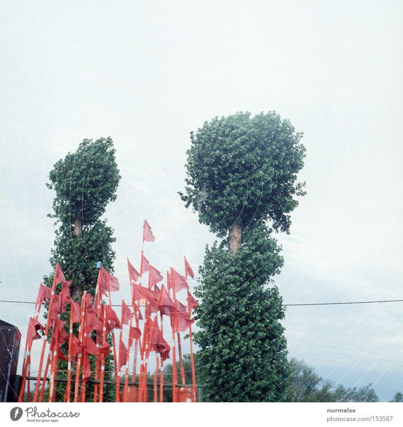 Wimpelfalle Baum rot Strand Küste Wind Schilder & Markierungen frei Europa Sträucher Netz obskur Bucht Ostsee Norden Fischer Dia