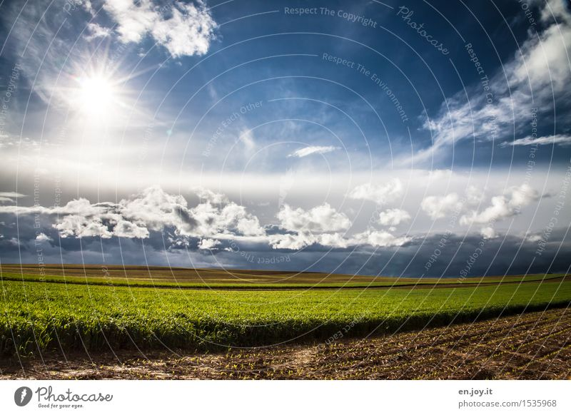Neubeginn Gesunde Ernährung Landwirtschaft Forstwirtschaft Energiewirtschaft Umwelt Natur Landschaft Pflanze Himmel Wolken Horizont Sonne Sonnenlicht Frühling