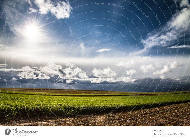 Neubeginn Himmel Natur Pflanze blau grün Sommer Sonne Gesunde Ernährung Landschaft Wolken Umwelt Frühling Religion & Glaube Horizont Feld Energiewirtschaft