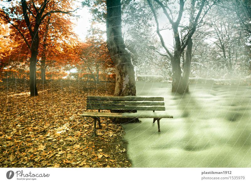 Jahreszeiten Sonne Winter Schnee Natur Herbst Schönes Wetter Nebel Pflanze Baum Gras Garten Park Wald Holz sitzen Manipulation Fotomanipulation abstrakt träumen