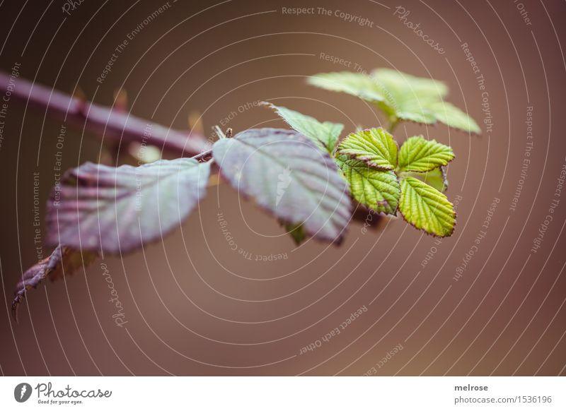 Frühling im Anmarsch Stil Umwelt Natur Schönes Wetter Pflanze Baum Blüte Wildpflanze Zweige u. Äste Blatt Blätterdach Dorn blättern Feld stechend Farbfleck