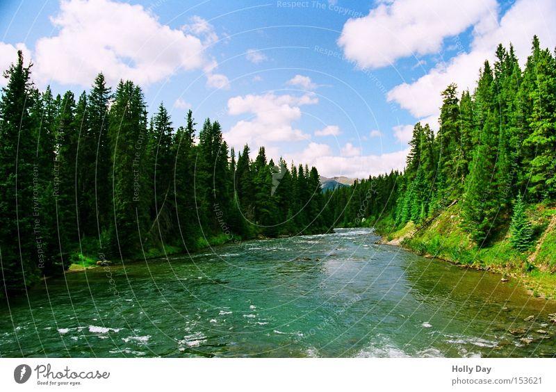 Maligne River Wasser Baum grün Sommer Wolken Wald Küste Elektrizität Fluss Amerika Kanada Bach fließen Nationalpark Gewässer Alberta