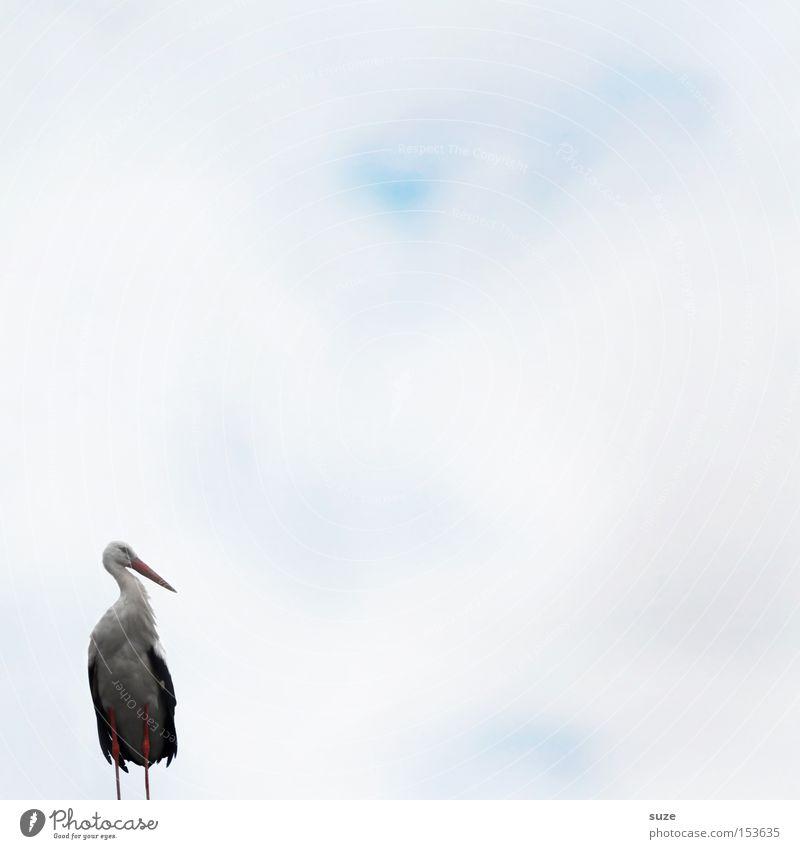 Herr Adebar Himmel Natur Pflanze weiß Landschaft Tier Umwelt Glück Vogel Luft träumen Wildtier stehen warten Zeichen Hoffnung