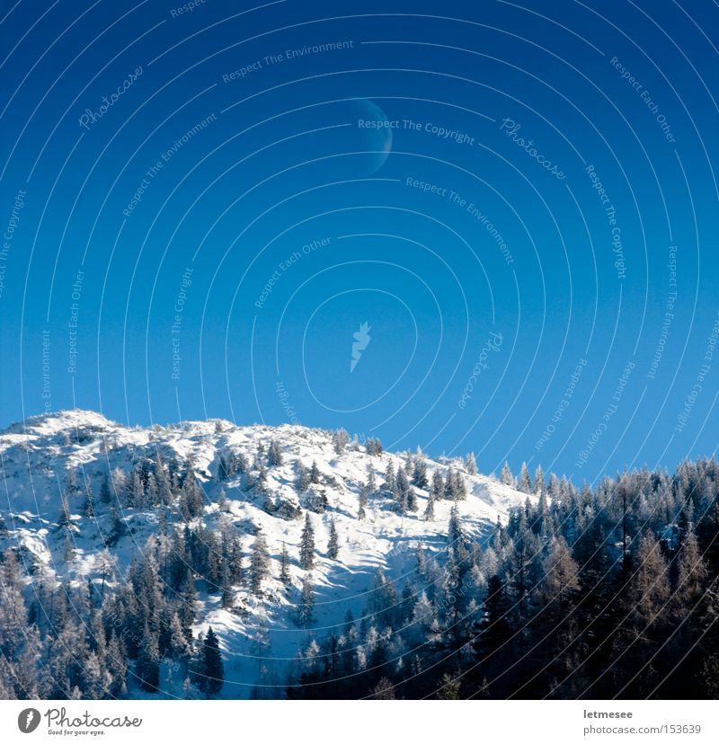 Days Moon Winter Wald kalt Schnee Berge u. Gebirge Eis Alpen Mond Österreich Bundesland Tirol Himmelskörper & Weltall Fichte Halbmond