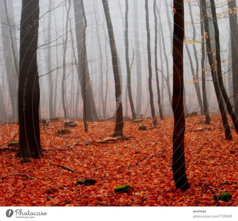 Rotlichtviertel Nebel Wald Baum Natur Landschaft Blatt rot braun Stimmung Herbst