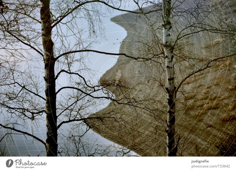 Stausee Natur Baum Winter Farbe Wald kalt See Wellen wandern Umwelt Seeufer Birke Harz Laubbaum