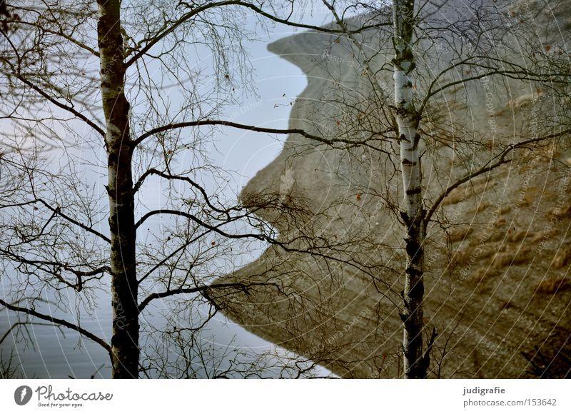 Stausee Talsperre See Harz Seeufer Wellen Birke Wald Baum Laubbaum Winter kalt wandern Natur Umwelt Farbe rappbodetalsperre