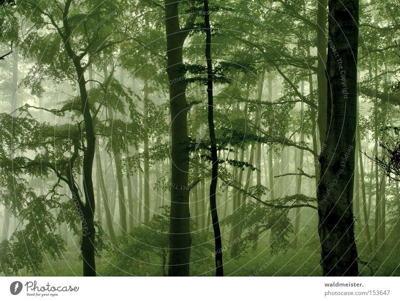 Wald Baum grün ruhig Blatt Erholung Holz Nebel Romantik Urwald Gemälde mystisch Märchen Zauberei u. Magie