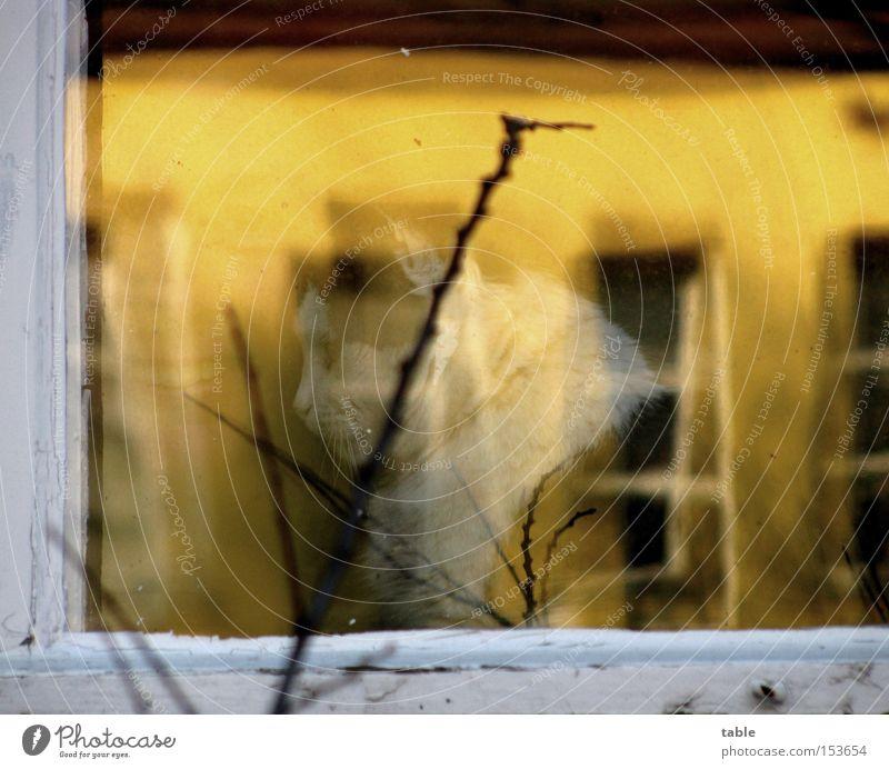 Freundinnen Reflexion & Spiegelung Fenster Frau Katze Aussicht Fensterscheibe Fensterrahmen Zweig lachen sitzen weiß gelb dunkel hell Freude Glas Rahmen