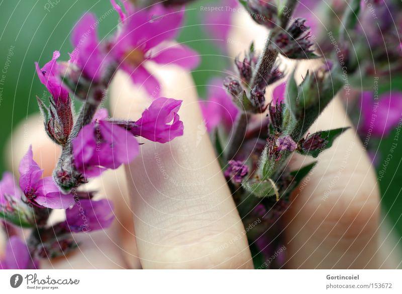Sensibel Mensch Natur Hand schön Blume grün Pflanze Sommer ruhig Erholung Blüte Frühling Garten Haut Umwelt Finger