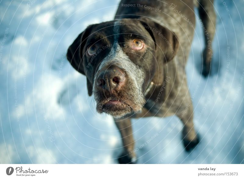 Hundeblick Winter Tier kalt Schnee Traurigkeit Trauer Wunsch Appetit & Hunger Säugetier Erwartung betteln