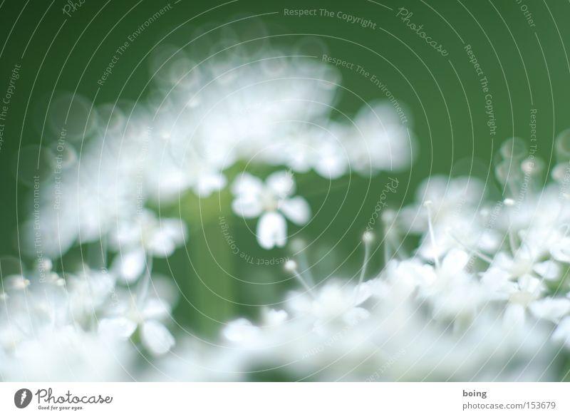 Metamorphose I Blume grün Pflanze Frühling frisch Blühend