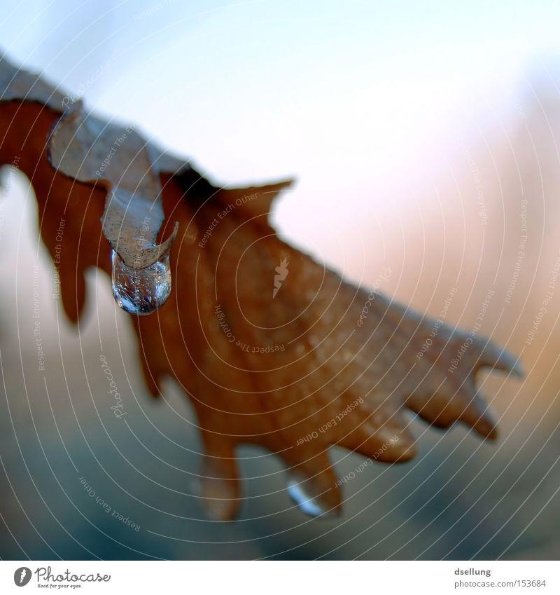Elysium Wasser Sonne Winter Blatt Eis gefroren frieren aufwärts bewegungslos Lichtbrechung standhaft Herbstfärbung Kontinuität klirrende Kälte