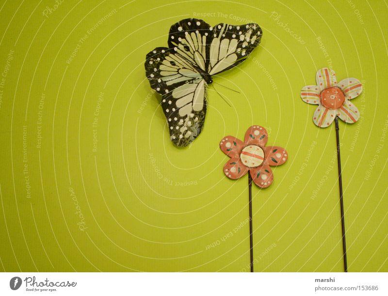 wann wirds endlich Frühling? Blume grün Freude Gefühle springen Sehnsucht Schmetterling vermissen Jahreszeiten