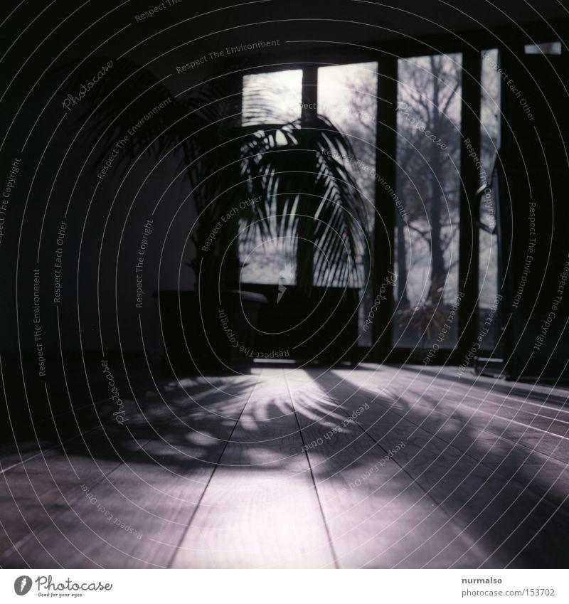 Palme im Haus Haus Fenster Holz Architektur Wohnung Insel Bodenbelag Häusliches Leben Sehnsucht Palme Flur Botanik Architekt Karibisches Meer Rio de Janeiro Gewächshaus