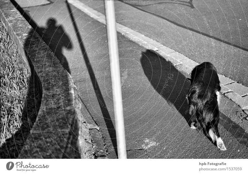 Hund und Herr wandern Mensch Paar 2 Straße Wege & Pfade Tier Haustier 1 laufen ästhetisch außergewöhnlich Zusammensein schön schwarz weiß Freude Sympathie