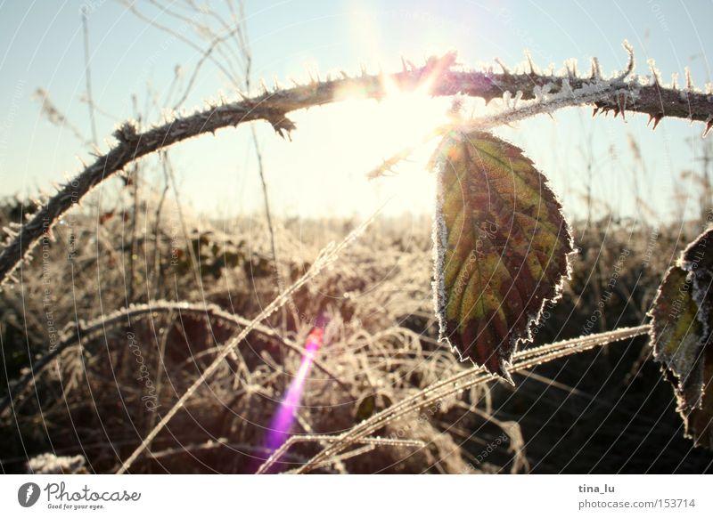 vereist III Himmel Natur Sonne Winter kalt Schnee Gras Beleuchtung Eis Wind Feld Frost Halm Sonnenfleck