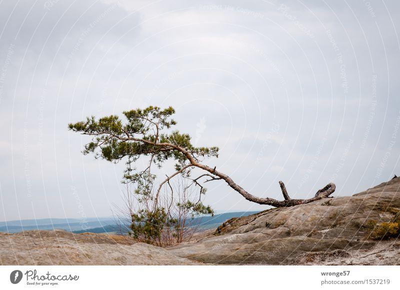 Fest verwurzelt Himmel Natur alt grün Baum Landschaft Wolken Herbst grau Stein braun Felsen Horizont Luft Erde einzeln