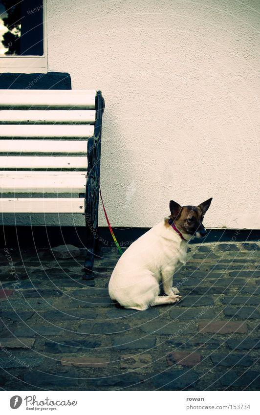 wartezeiten Hund Traurigkeit Park warten Seil Trauer Bank Säugetier Erwartung Treue Ausdauer geduldig Tier Ungeduld